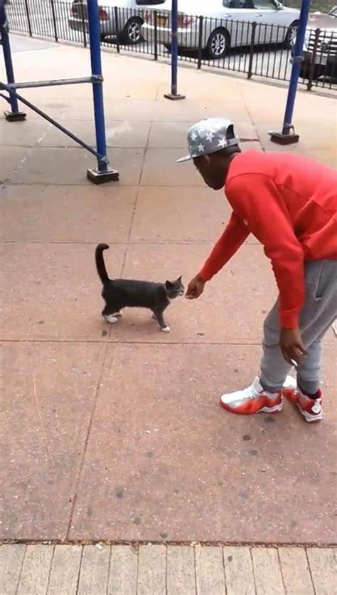 Andre Robinson: andare in galera per un calcio a un gatto?